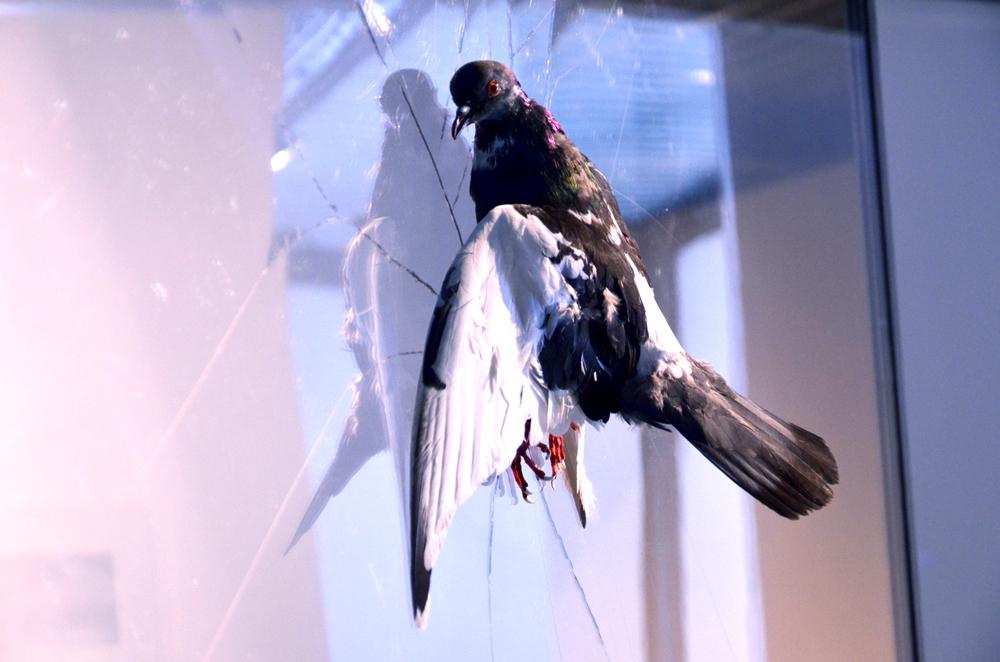 """Particolare dell'installazione """"A Love Supreme"""" di Daniele Breccia"""