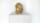 Falci&Barzaghi_abbastanza bene ma...pezzi d'oro_materiali vari_2009